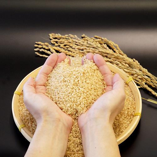 多古米 玄米