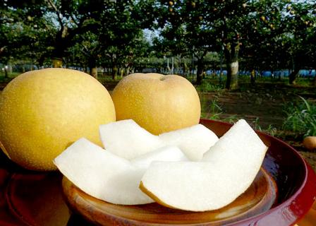 千葉県産 地域ブランド 「市川の梨」 豊水(ほうすい) 3kg