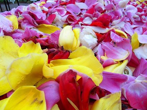 花の部分が切られたチューリップ