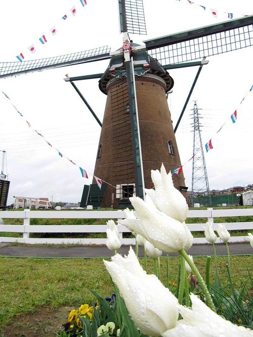 風車とチューリップ 風景