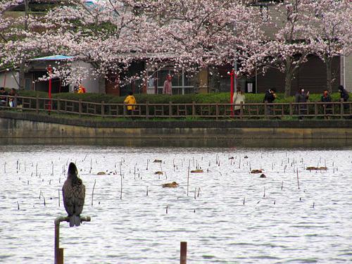 八鶴湖と黒鳥