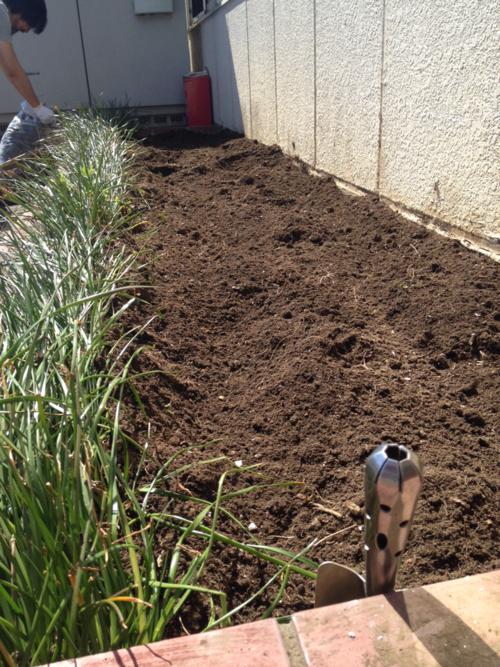 土造りした花壇