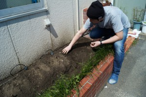 花壇に落花生を植える男性