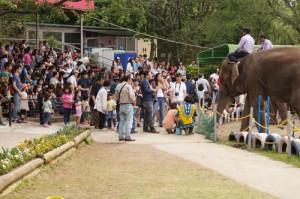 ゾウの前に並ぶ子どもたち
