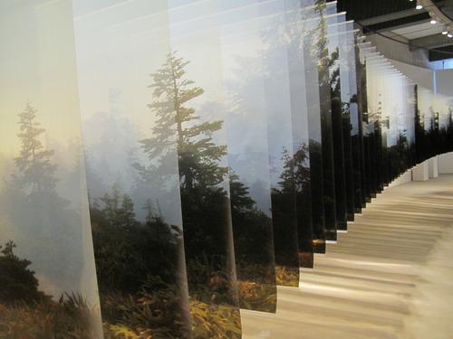 数メートルおきに撮られた森の写真
