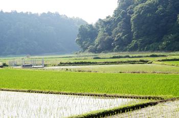 自然に囲まれた田んぼ